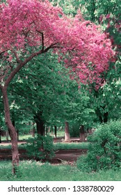 Beautiful spring tree cherry in the park