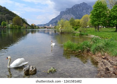 Beautiful spring view to the Adda river, flowing from the lake Como, the town of Lecco, nature and two white swans swimming near the shore.