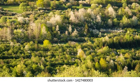 Beautiful spring view on trees very close to Terchova village, M