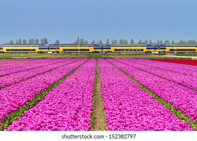 Beautiful spring view on a tulip field in the Netherlands with a train in the background