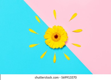 Beautiful Spring Yellow Flower Gerber on colored background. Stylish flat lay. Minimal concept. Flat lay background.