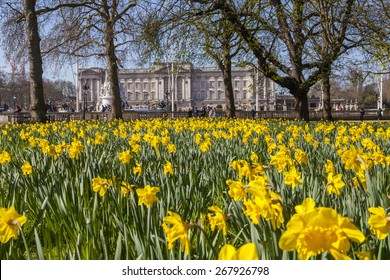 A beautiful Springtime view of Buckingham Palace from Green Park in London.