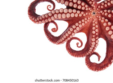 Beautiful of a squid tentacles isolated on white background