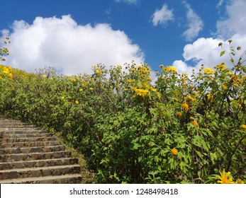Beautiful stair in the middle of nature with blossoming of wild sunflowers