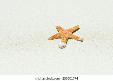 Beautiful starfish on bright white sand.