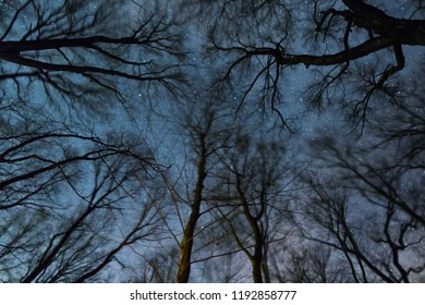 Beautiful Starry night, the Milky Way and the trees, Windy night moving trees,