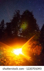 Beautiful starry night sky, the Milky Way over summer trees and bright mistical shine