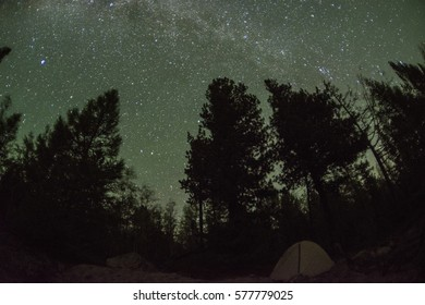 Beautiful starry sky over the forest. Beautiful night landscape.