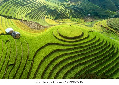 Beautiful step of rice terrace paddle field in sunset and dawn at Mam Xoi hill, Mu Cang Chai, Vietnam. Mu Cang Chai is beautiful in nature place in Vietnam, Southeast Asia. Travel concept. Aerial view