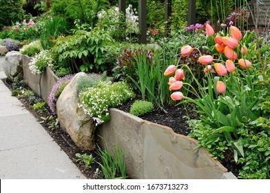 Schöne Steinmauer, Garten mit Tulpen und Flocken