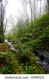 Beautiful Stream with Fog in Rain Forest (Doi Inthanon National Park), Thailand