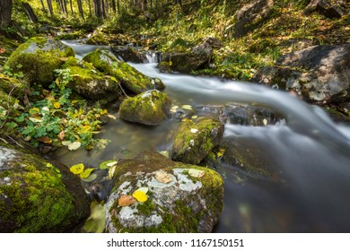 beautiful stream in the forest