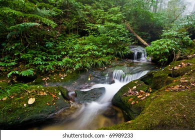 Beautiful Stream in Rain Forest (Doi Inthanon National Park), Thailand