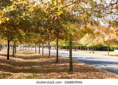 Beautiful street with colourful leaves in Autumn in Macedon Range, Victoria, Australia.
