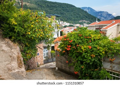 Beautiful street european small town.  A small town near the Mediterranean Sea. Stone wall, green garden with flowers. Petrovac, Montenegro.