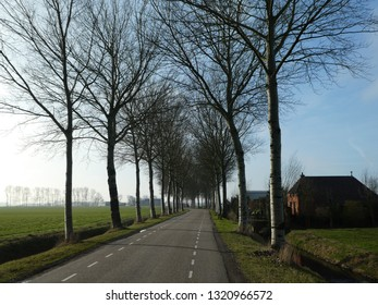 beautiful street in the Netherlands with trees