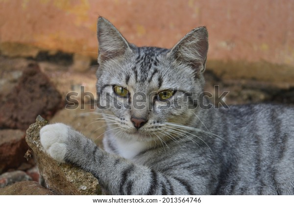 Beautiful striped black and white cat relaxing on a rock