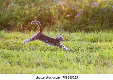 beautiful striped cat is a fun and graceful running through a summer meadow, raising his paws