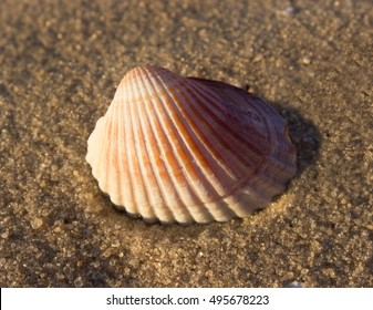 beautiful striped shell on the sand, the evening sun, close-up