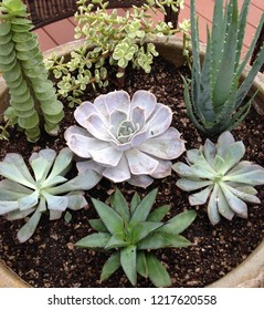 Beautiful succulent arrangement.