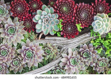 Beautiful succulents in a planter