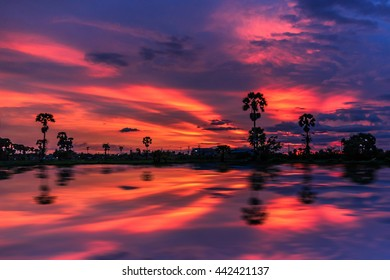 Beautiful sugar palm tree with twilight sky,Thailand