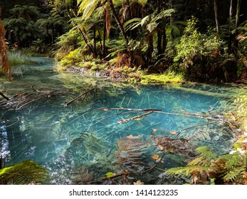 beautiful sulphuric pond with crystal clear blue water in the middle of a subtropical jungle