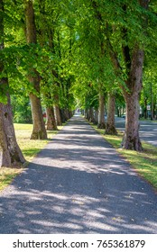 beautiful summer alley in park with old trees