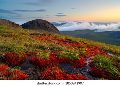Beautiful summer Arctic landscape. Colorful red moss and flowers in the tundra on a mountain slope. Evening fog in the mountains. Hiking in remote wilderness. Ushkany ridge, Chukotka, Siberia, Russia.