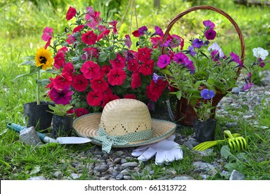 Beautiful summer background with flowers, garden tools and straw hat against sunny grass background. Vintage planting flowers concept