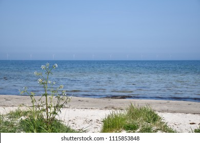 Beautiful summer beach with a windmill farm in the horizon at the swedish island Oland in the Baltic Sea
