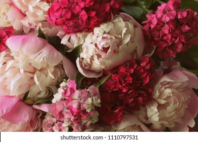 Beautiful summer flowers. Bouquet of pink peony and William background.