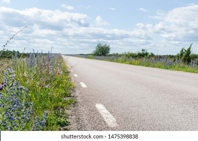Beautiful summer flowers by a country road side at the island Oland in Sweden,  an area in the World Heritage  Agricultural Landscape of Southern Oland
