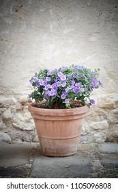 Beautiful summer flowers in pot