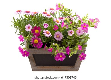Beautiful summer flowers in a pot isolated on white
