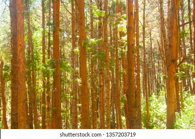 Beautiful summer forest with different trees, Dark forest background.
