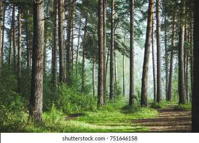 Beautiful summer forest with different trees