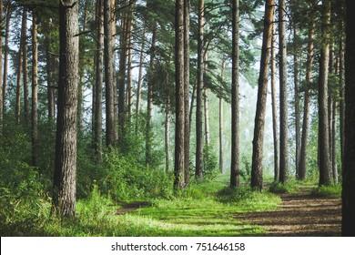 Hermoso bosque de verano con árboles diferentes
