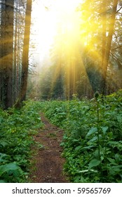 beautiful summer forest in the rays of sun
