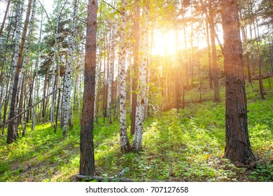 Beautiful summer forest in the sun
