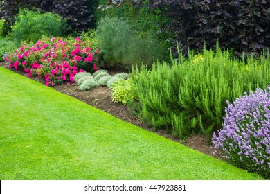 Beautiful, summer garden with red roses and various plants