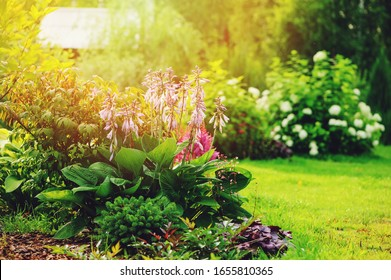 beautiful summer garden view, mixed border with hosta, conifers, hydrangea and other shrubs and flowers