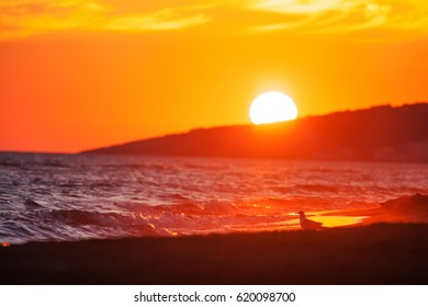 Beautiful summer golden sunset above the sea with calm waves and reflection of sun on the beach.