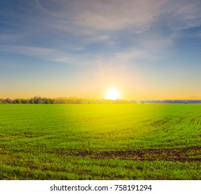 beautiful summer green field at the sunset