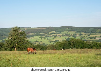 beautiful summer landscape of the belgian ardennes with horse in warm evening light near stavelot