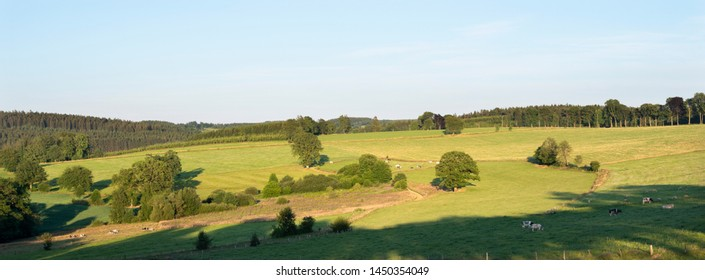 beautiful summer landscape of the belgian ardennes with cattle in warm evening light near stavelot