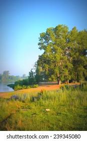 Beautiful summer landscape, big trees near river, morning fog