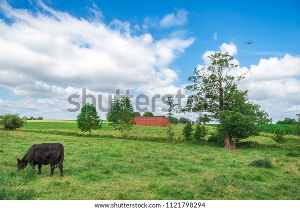 Beautiful summer landscape with a black cow grazing on a green pasture, while an airplane is flying in the sky, in Baden Wurttemberg region, Germany.