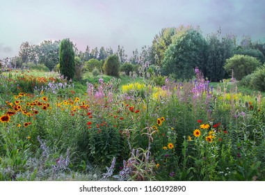 Beautiful summer landscape with blooming garden flowers. Rudbeckia and fireweed plants. Evening in countryside in East Europe, Latvia.
