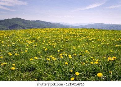 Beautiful summer landscape with blooming yellow dandelions, White Carpathians in background, Czech and Slovak republics, sunny day, clear blue sky